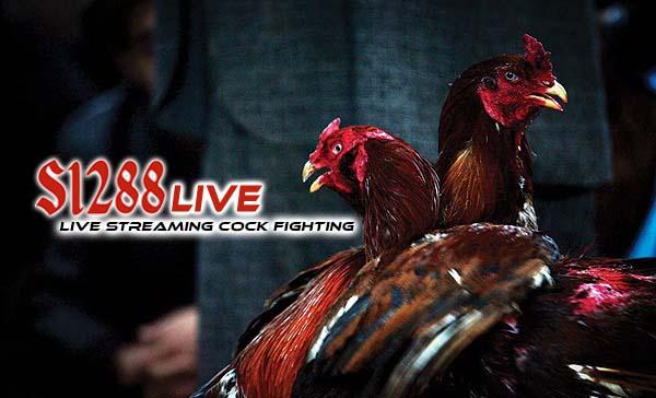 Agen S128 Sabung Ayam Online